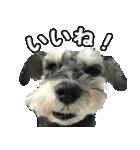 Hello Choko [敬語・挨拶、よく使う言葉](個別スタンプ:24)