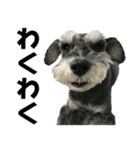 Hello Choko [敬語・挨拶、よく使う言葉](個別スタンプ:25)
