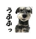 Hello Choko [敬語・挨拶、よく使う言葉](個別スタンプ:26)