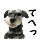 Hello Choko [敬語・挨拶、よく使う言葉](個別スタンプ:28)
