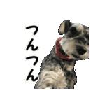 Hello Choko [敬語・挨拶、よく使う言葉](個別スタンプ:29)