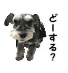 Hello Choko [敬語・挨拶、よく使う言葉](個別スタンプ:30)