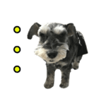 Hello Choko [敬語・挨拶、よく使う言葉](個別スタンプ:32)