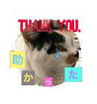 おだて上手猫舎(個別スタンプ:01)