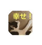 おだて上手猫舎(個別スタンプ:02)