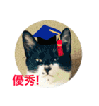 おだて上手猫舎(個別スタンプ:05)