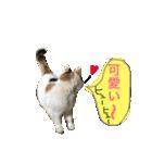 おだて上手猫舎(個別スタンプ:06)