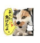 おだて上手猫舎(個別スタンプ:07)