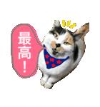 おだて上手猫舎(個別スタンプ:08)