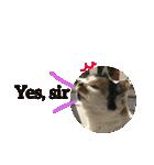 おだて上手猫舎(個別スタンプ:09)