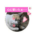 おだて上手猫舎(個別スタンプ:10)