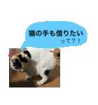 おだて上手猫舎(個別スタンプ:12)