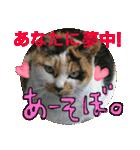 おだて上手猫舎(個別スタンプ:13)