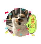 おだて上手猫舎(個別スタンプ:15)