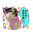 おだて上手猫舎(個別スタンプ:16)