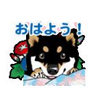 わんこ日和 黒柴11 夏(個別スタンプ:01)