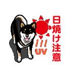 わんこ日和 黒柴11 夏(個別スタンプ:04)
