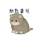 猫屋すたんぷ ふたつめ(個別スタンプ:13)