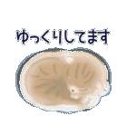 猫屋すたんぷ ふたつめ(個別スタンプ:17)