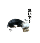 るうくん 第2弾(個別スタンプ:02)