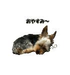 るうくん 第2弾(個別スタンプ:08)