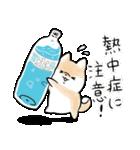 ほんわかしばいぬ<夏>(個別スタンプ:17)