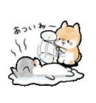 ほんわかしばいぬ<夏>(個別スタンプ:25)