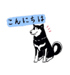 Every Day Dog 黒柴 日本語(個別スタンプ:02)