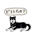 Every Day Dog 黒柴 日本語(個別スタンプ:08)