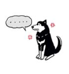 Every Day Dog 黒柴 日本語(個別スタンプ:12)