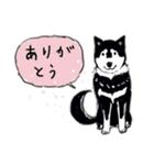 Every Day Dog 黒柴 日本語(個別スタンプ:13)