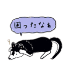 Every Day Dog 黒柴 日本語(個別スタンプ:17)