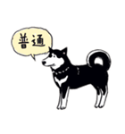 Every Day Dog 黒柴 日本語(個別スタンプ:20)