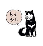 Every Day Dog 黒柴 日本語(個別スタンプ:21)