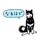 Every Day Dog 黒柴 日本語(個別スタンプ:22)