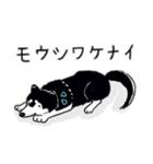 Every Day Dog 黒柴 日本語(個別スタンプ:24)