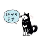 Every Day Dog 黒柴 日本語(個別スタンプ:26)