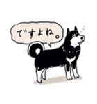 Every Day Dog 黒柴 日本語(個別スタンプ:34)