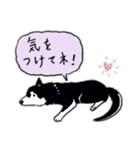Every Day Dog 黒柴 日本語(個別スタンプ:40)
