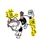 吉田戦車「来れば?ねこ占い屋」(個別スタンプ:2)