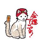 吉田戦車「来れば?ねこ占い屋」(個別スタンプ:12)