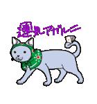 吉田戦車「来れば?ねこ占い屋」(個別スタンプ:17)