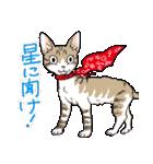吉田戦車「来れば?ねこ占い屋」(個別スタンプ:32)