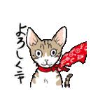 吉田戦車「来れば?ねこ占い屋」(個別スタンプ:33)