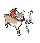 吉田戦車「来れば?ねこ占い屋」(個別スタンプ:34)