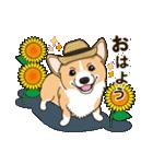 気軽にスタンプ コーギー 夏季編(個別スタンプ:01)