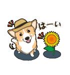 気軽にスタンプ コーギー 夏季編(個別スタンプ:03)