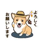 気軽にスタンプ コーギー 夏季編(個別スタンプ:05)