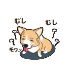 気軽にスタンプ コーギー 夏季編(個別スタンプ:09)