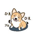 気軽にスタンプ コーギー 夏季編(個別スタンプ:10)